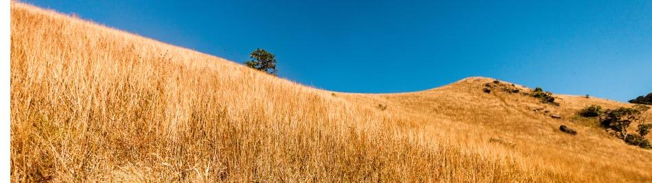grass2-1377